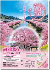 kawazu-sakura2016