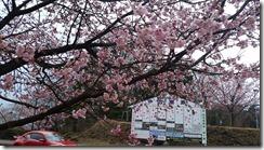 桜420160306_