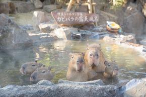 kapibaraかぴばら露天