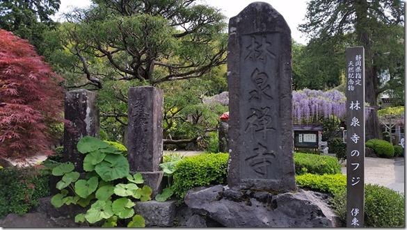 林泉寺藤 (2)
