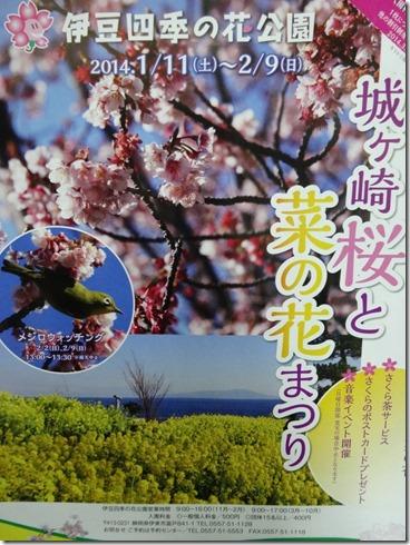 城ヶ崎桜と菜の花まつり1-768x1024