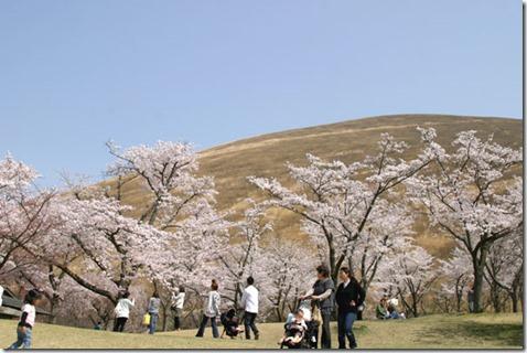 sakuranosato110411-16