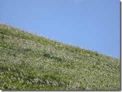 すすきの季節の大室山